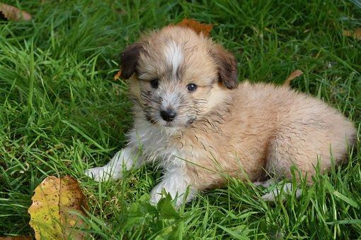 puppy 3709494  340 - Welpentraining